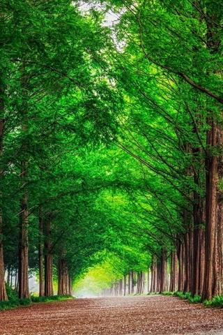 Красивые картинки на телефон лето, пейзажи лета, природа и растения 5