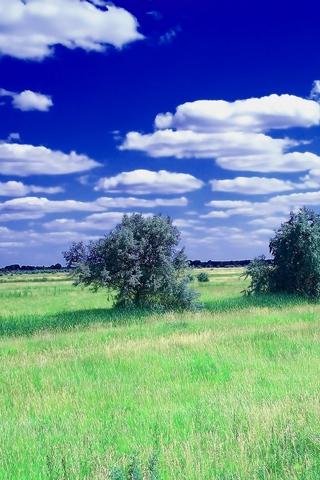 Красивые картинки на телефон лето, пейзажи лета, природа и растения 6