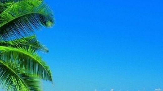Красивые картинки на телефон лето, пейзажи лета, природа и растения 7