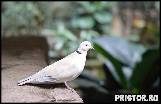 К чему снятся белые голуби Что означают белые голуби в сновидениях 2