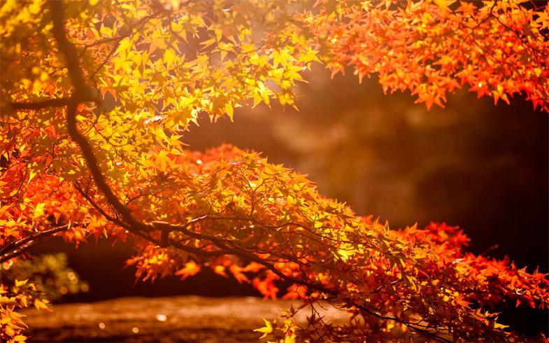 Осеннее утро, утро осенью - красивые и невероятные картинки 12