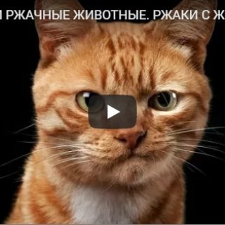 Подборка смешных и веселых видео про животных за конец лета 2018