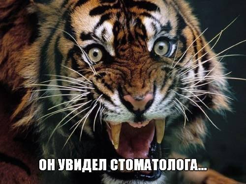 Подборка смешных и ржачных картинок про животных - сборка №82 10
