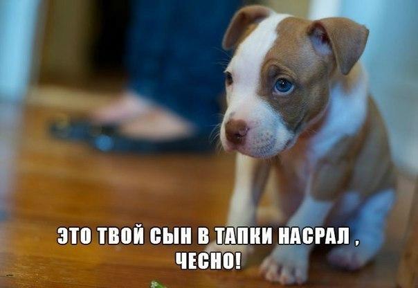 Подборка смешных и ржачных картинок про животных - сборка №82 15