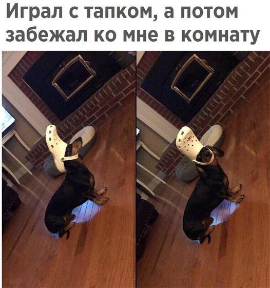 Подборка смешных и ржачных картинок про животных - сборка №82 16