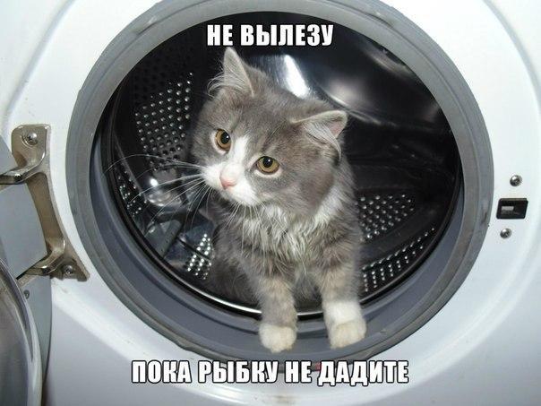 Подборка смешных и ржачных картинок про животных - сборка №82 3