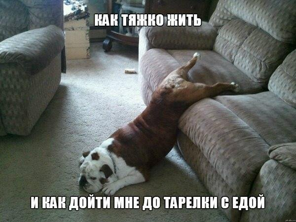 Подборка смешных и ржачных картинок про животных - сборка №82 5