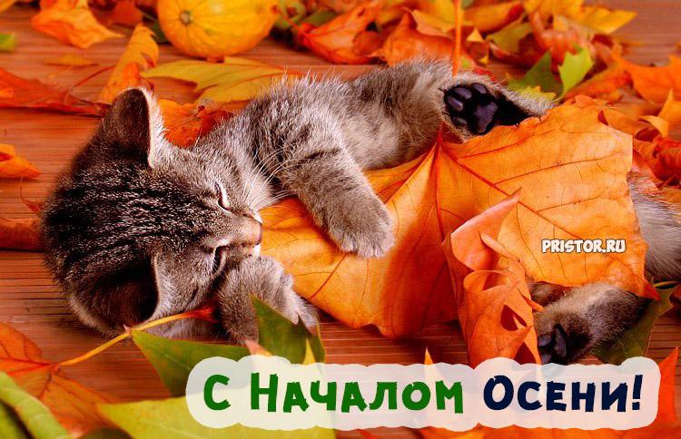 Поздравления с осенью (с первым днем осени) - картинки и открытки 5