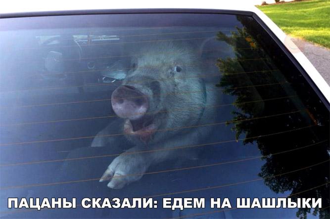 Смешные и угарные картинки с надписями про зверей и животных №79 1