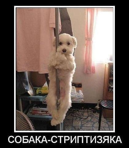 Смешные и угарные картинки с надписями про зверей и животных №79 10