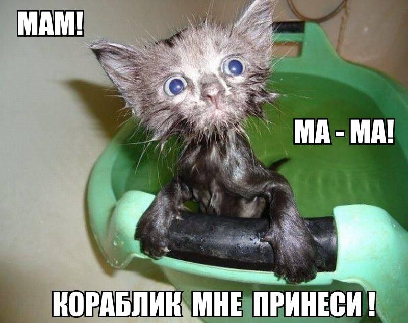 Смешные и угарные картинки с надписями про зверей и животных №79 12