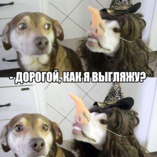 Смешные и угарные картинки с надписями про зверей и животных №79 14