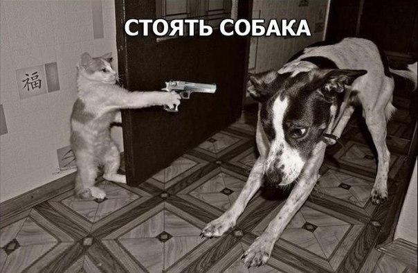 Смешные и угарные картинки с надписями про зверей и животных №79 15