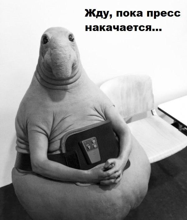 Смешные и угарные картинки с надписями про зверей и животных №79 3
