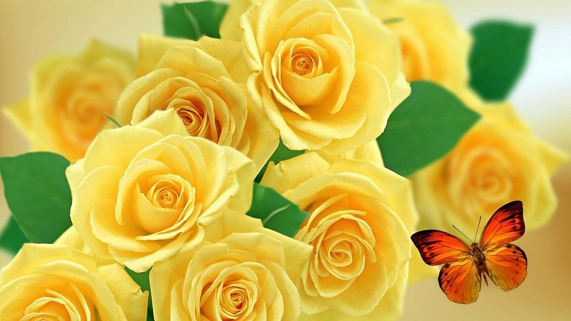 Удивительные картинки на рабочий стол Желтые розы - подборка 2