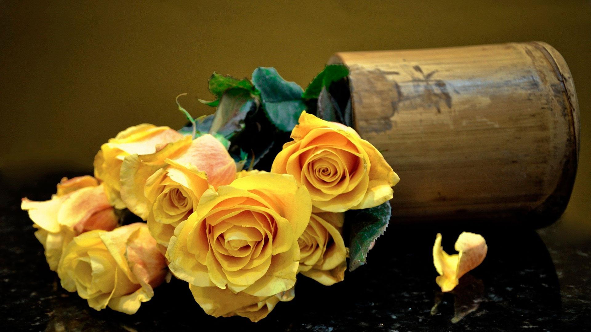 Удивительные картинки на рабочий стол Желтые розы - подборка 6