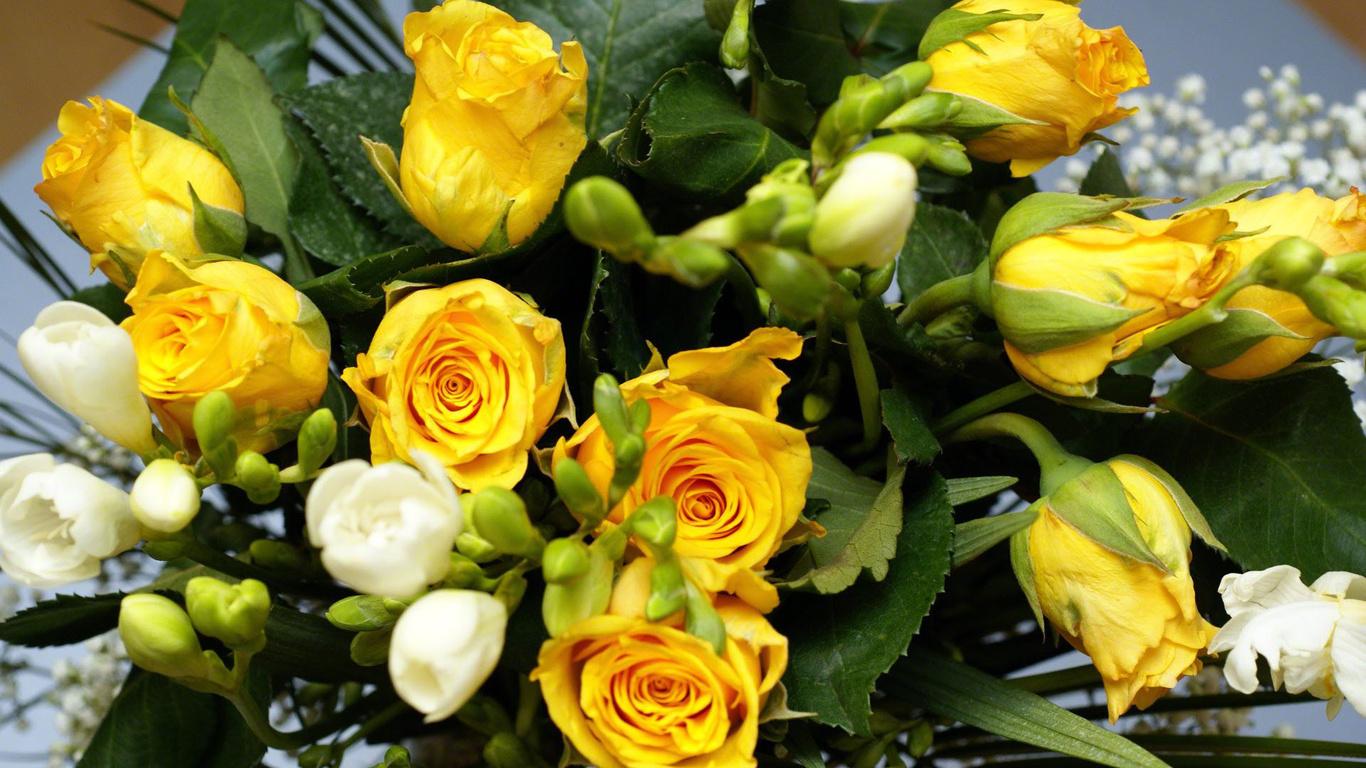 Удивительные картинки на рабочий стол Желтые розы - подборка 7