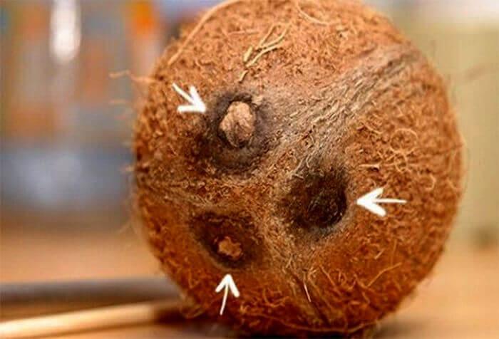 Как открыть кокос в домашних условиях - простые способы и методы 2