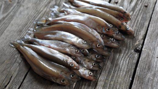 Как правильно почистить корюшку - 3 способа очистки рыбы 1