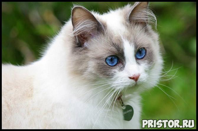 Кошка в качестве домашнего питомца стоит ли заводить кошку, преимущества 2