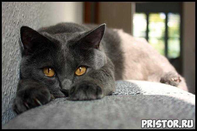 Кошка в качестве домашнего питомца стоит ли заводить кошку, преимущества 3