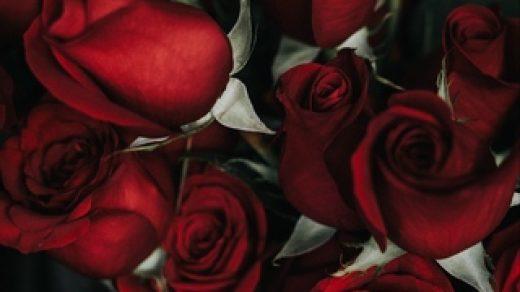 Красивые и милые картинки, обои розы для заставки телефона - сборка 12