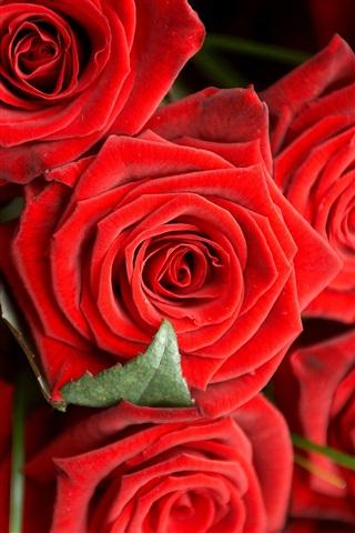 Красивые и милые картинки, обои розы для заставки телефона - сборка 14