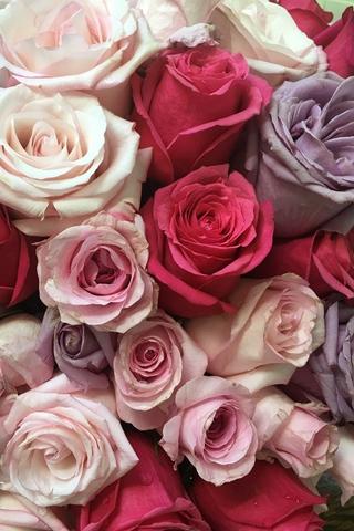 Красивые и милые картинки, обои розы для заставки телефона - сборка 6
