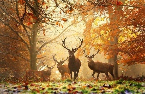 Красивые и удивительная осень. Подборка картинок 20 штук 1