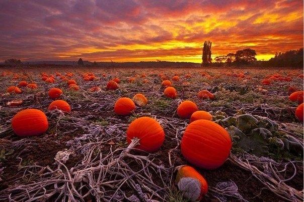 Красивые и удивительная осень. Подборка картинок 20 штук 11