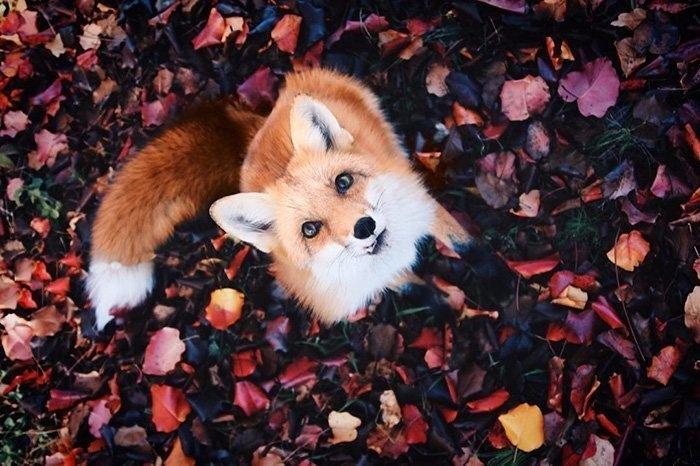 Красивые и удивительная осень. Подборка картинок 20 штук 13