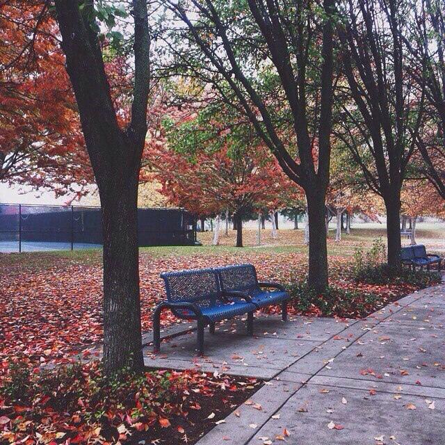 Красивые и удивительная осень. Подборка картинок 20 штук 14