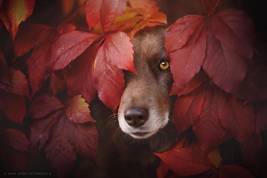 Красивые и удивительная осень. Подборка картинок 20 штук 20