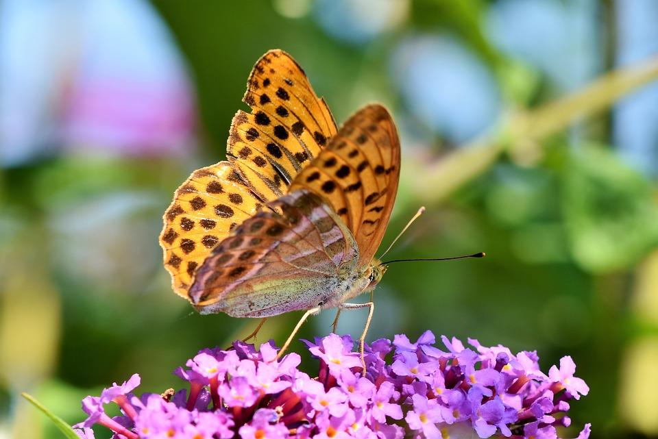 Красивые и удивительные картинки бабочек - подборка 20 фото 13
