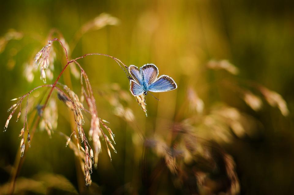 Красивые и удивительные картинки бабочек - подборка 20 фото 14