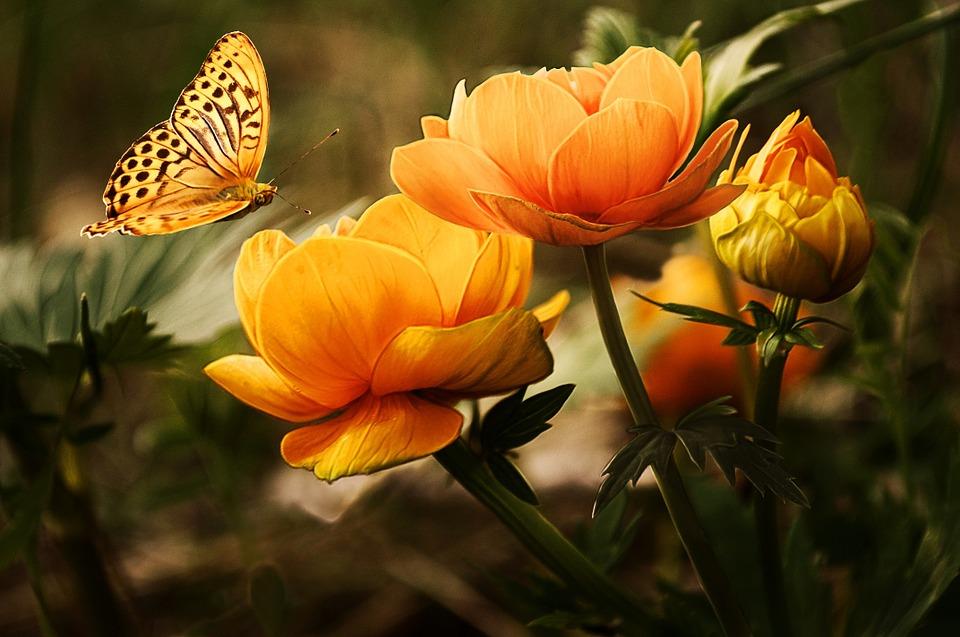 Красивые и удивительные картинки бабочек - подборка 20 фото 15