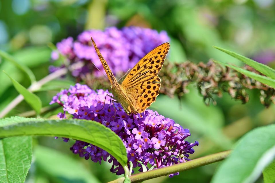Красивые и удивительные картинки бабочек - подборка 20 фото 18