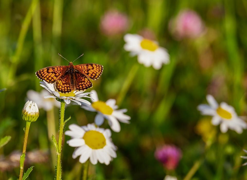 Красивые и удивительные картинки бабочек - подборка 20 фото 3