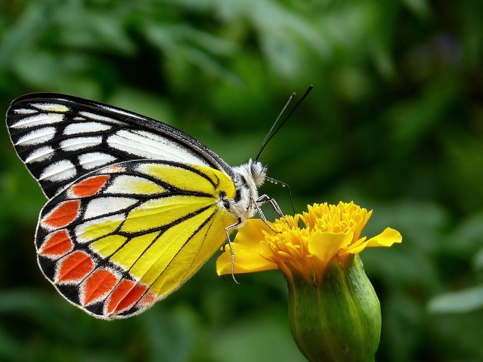 Красивые и удивительные картинки бабочек - подборка 20 фото 4