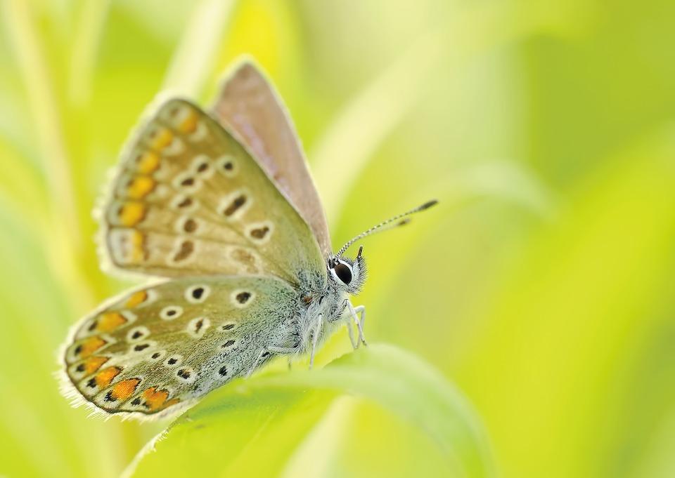 Красивые и удивительные картинки бабочек - подборка 20 фото 7