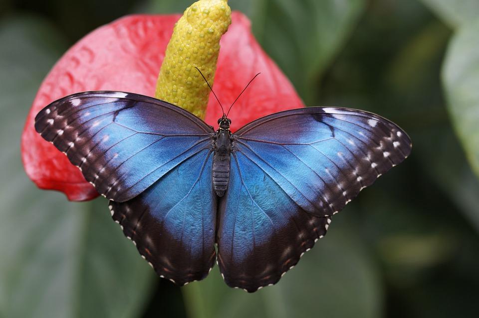 Красивые и удивительные картинки бабочек - подборка 20 фото 8