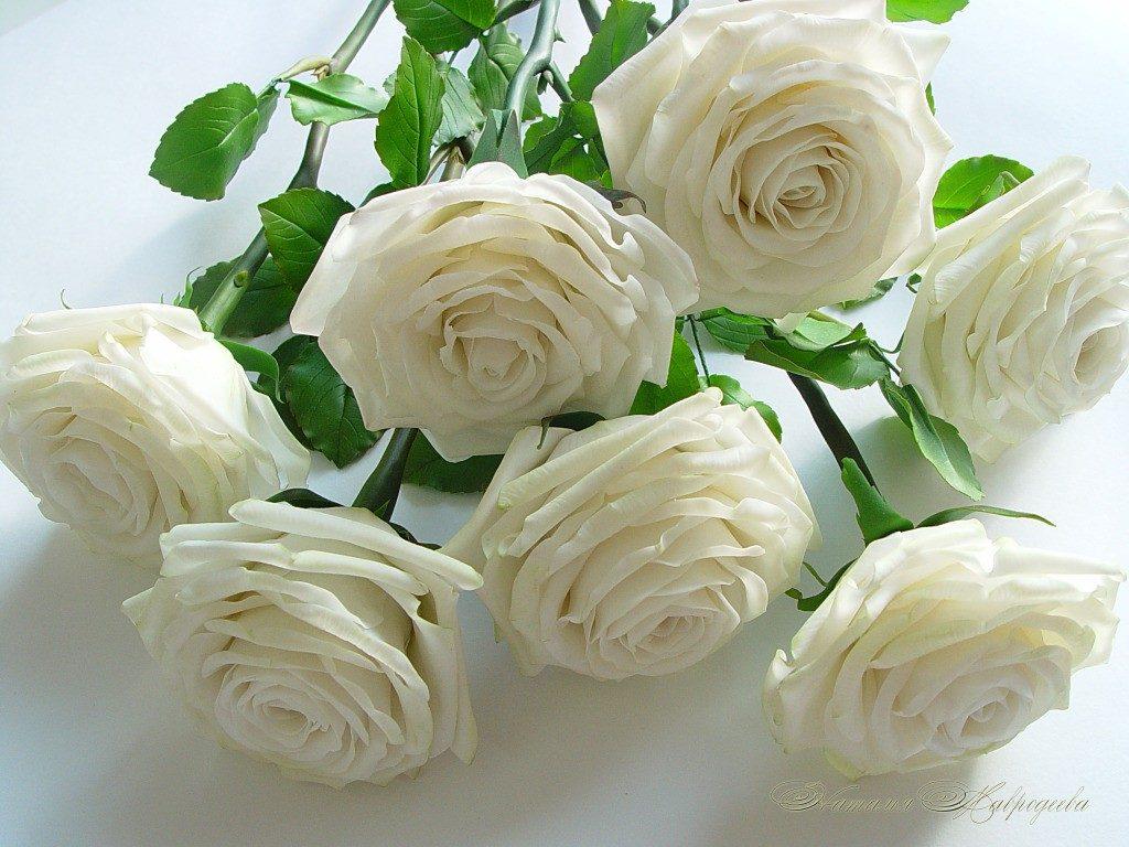 Красивые картинки цветов белые розы, удивительные букеты 16
