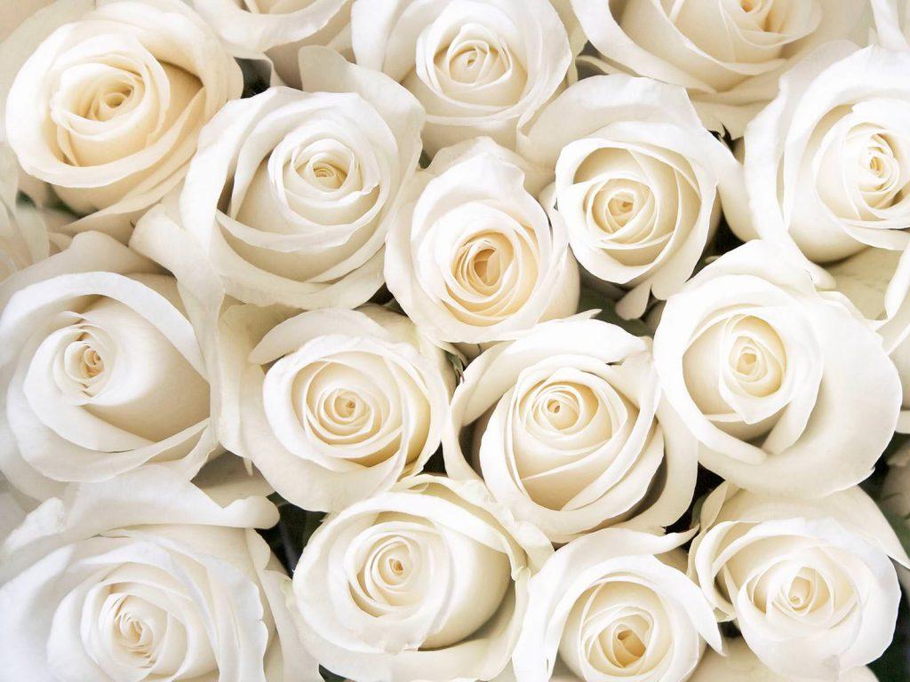 Красивые картинки цветов белые розы, удивительные букеты 5