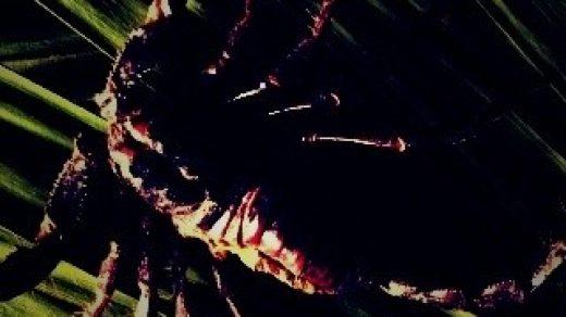 Красивые обои и картинки скорпионов на телефон на заставку 14