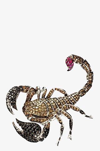 Красивые обои и картинки скорпионов на телефон на заставку 8
