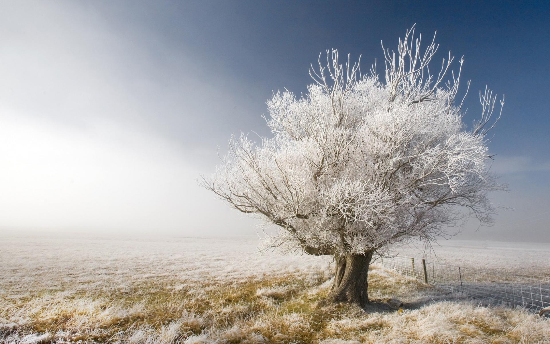 Невероятное и красивое дерево - картинки и изображения 12