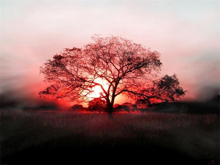 Невероятное и красивое дерево - картинки и изображения 13
