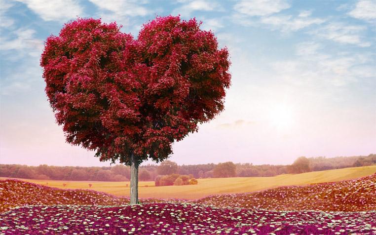 Невероятное и красивое дерево - картинки и изображения 15