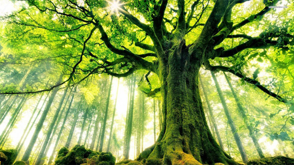 Невероятное и красивое дерево - картинки и изображения 18