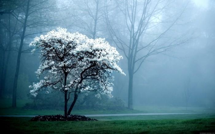 Невероятное и красивое дерево - картинки и изображения 19